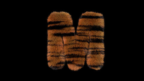 3D animated furry hairy zoo Tiger text typeface with alpha channel M Animation
