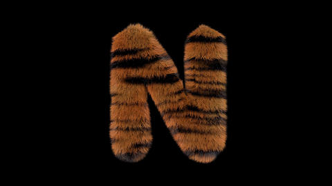 3D animated furry hairy zoo Tiger text typeface with alpha channel N Animation