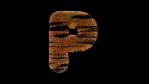 3D animated furry hairy zoo Tiger text typeface with alpha channel P Animation