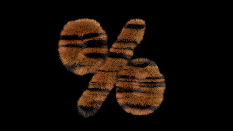 3D animated furry hairy zoo Tiger text typeface with alpha channel percent Animation