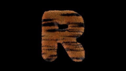 3D animated furry hairy zoo Tiger text typeface with alpha channel R Animation