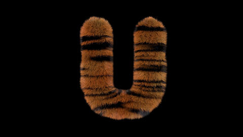 3D animated furry hairy zoo Tiger text typeface with alpha channel U Animation