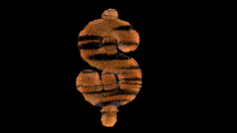 3D animated furry hairy zoo Tiger text typeface with alpha channel USD Animation
