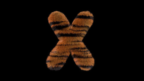 3D animated furry hairy zoo Tiger text typeface with alpha channel X Animation