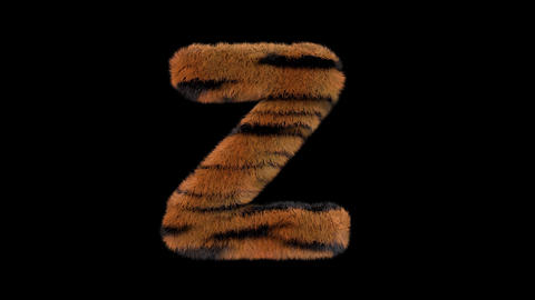 3D animated furry hairy zoo Tiger text typeface with alpha channel Z Animation