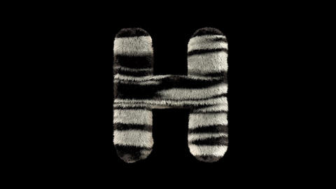 3D animated furry hairy zoo zebra text typeface with alpha channel H Animation