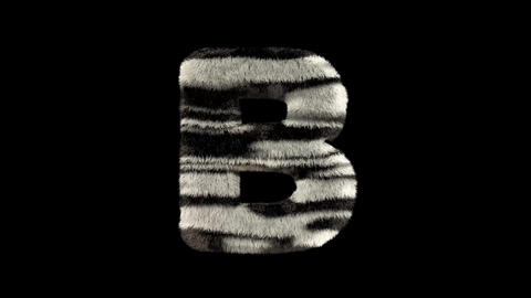 3D animated furry hairy zoo zebra text typeface with alpha channel B Animation