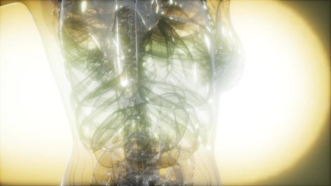 X-Ray Image Of Human Body GIF