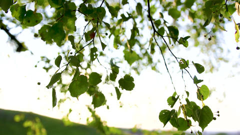 Sunlight coming through leaves, romantic spring Live Action
