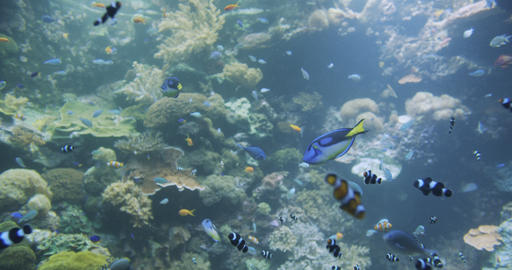 Underwater Colorful Tropical Fishes. Tropical underwater sea fishes Live Action