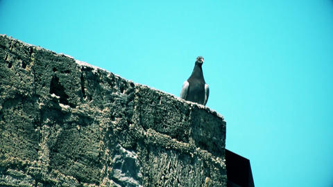The pigeon stands on the wall and takes off GIF