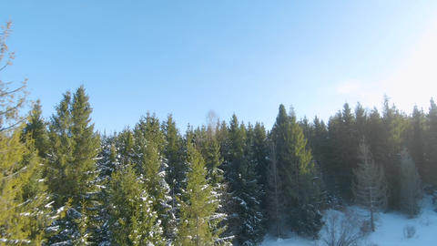 Aerial view of the spruce and snowy landscape around. Mountains visible in the Live Action