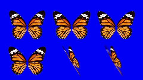 A set of Colorful Butterfly Wings Waving in Different Speed and Angles on a Blue Footage