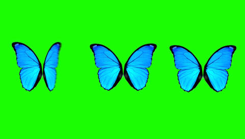 Butterfly Wings Moving in Different Speed on a Green Screen Background Live Action