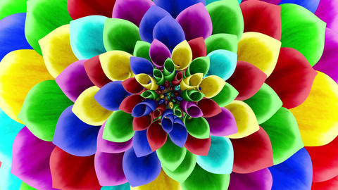 Opening Of The Multicolored Flower. Looped Animation