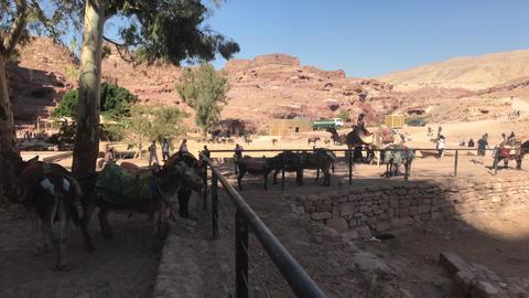 Petra, Jordan - October 17, 2019: tour groups study canyon part 5 Live Action