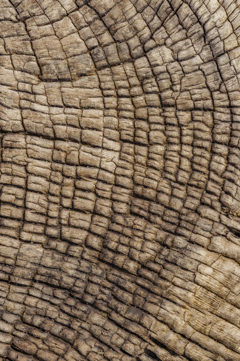 Wooden background from a shipwreck in the Skeleton Coast in Namibia Photo