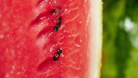 Macro 4k footage of water droplets rolling of cut watermelon pulp. Perfect Live Action
