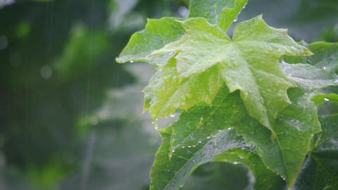 Rain in Summer Forest Live Action