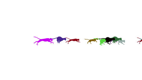 Group of Colorful Running Cats on a White Background Stock Video Footage