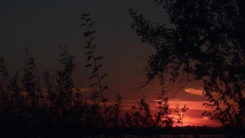 Sunset on a summer evening Footage
