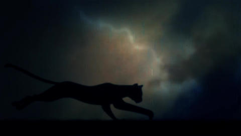 A Black Panther Runs Fast in Loop Under a Lightning Storm at Night Footage