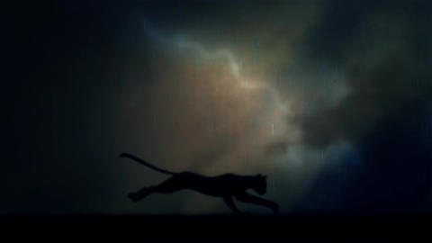 A Black Panther Runs Fast in Loop Under a Rain and Lightning Storm at Night Footage