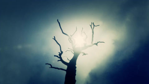 Creepy Dead Tree on a Spooky and Cloudy Background Footage