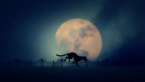 Stray Cat Running on a Rising Full Moon Background Footage