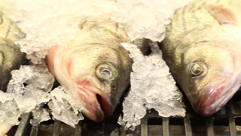 Dead Fish on Ice Lined Up in a Shop in a Market Live Action