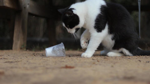 Smart Cat Drinking Milk Using His Paws from a Plastic Cup Stock Video Footage