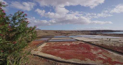 Salt flats - Janubio salt flats on Lanzarote Canary Islands Tourist Attraction Live Action