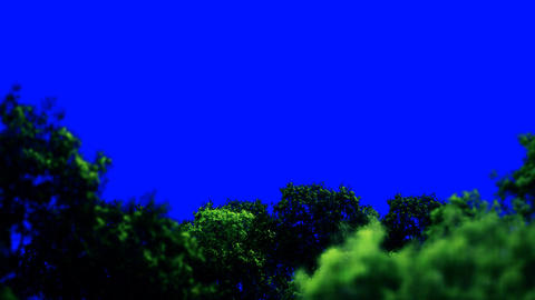 Forest Above the Trees Zooming In on a Blue Screen Live Action