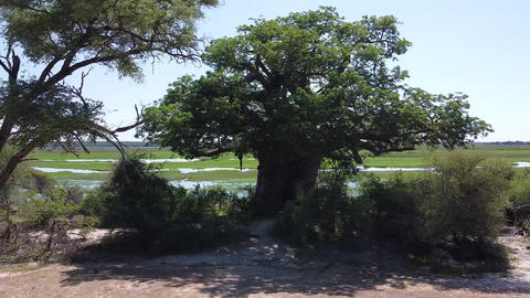 Drone crashes while filming the oldest baobab in Namibia, falling drone Live Action