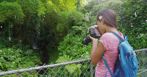 Tourist on Hawaii taking pictures of rainforest while hiking the famous Akaka Live Action