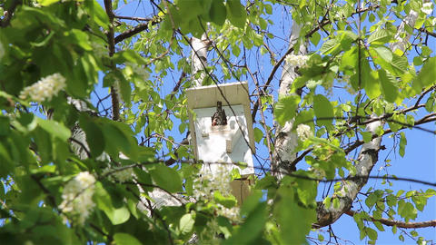A starling nesting box Footage