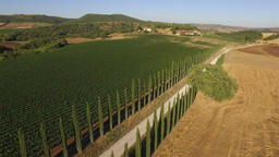 Aerial: low flight over the road between beautiful Italian cypress plants and vi Footage