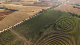 Aerial shot of Italian vineyard and a road between cypress plants Footage