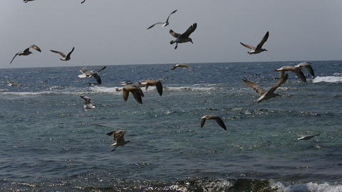 seagulls flying over the red sea. hundreds of birds flying in the sky Live Action