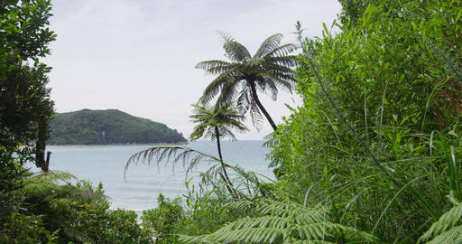 New Zealand Travel Vacation Beach Destination Abel Tasman National Park Live Action