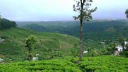 Tea plantations landscape panning view. Sri Lanka traditional agriculture Footage