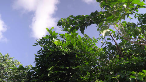 Blue sky and white clouds and trees Live影片