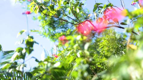 Flower, grass, tree, wood, blue sky Live影片