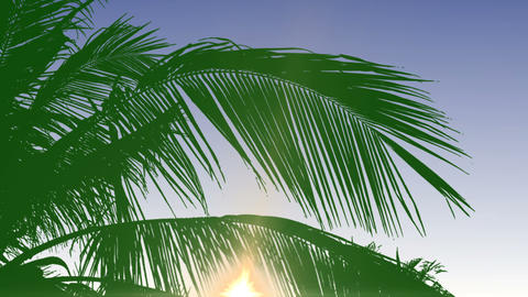 Background With Palm Tree Leaves - Day CG動画