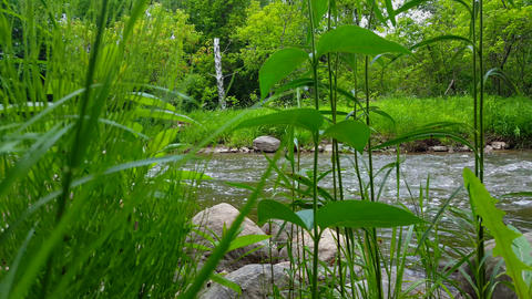 *Fast Motion* Time Lapse Fast Speed Flowing River Surrounded by Lush Green Grass in Summer Day. Live Action