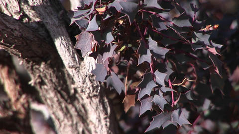 Close-up of purple leaves on a tree Stock Video Footage