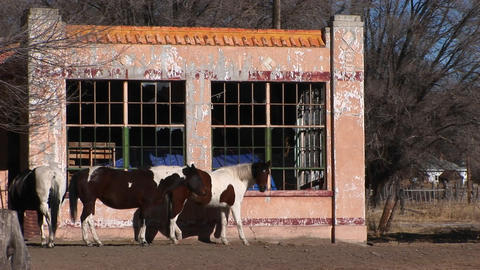 Medium shot of horses standing outside an abandoned building Footage