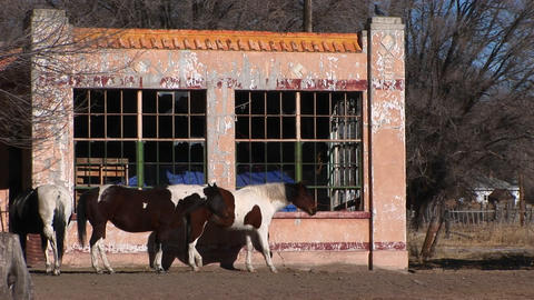 Medium shot of horses standing outside an abandoned building Stock Video Footage