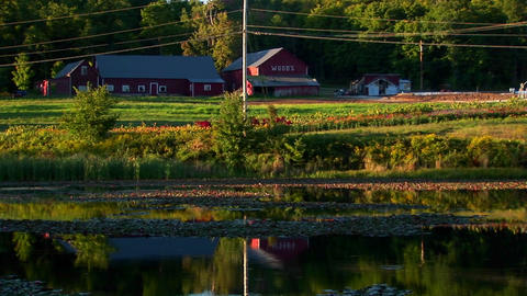A farm and field near a body of water at sunset in Vermont Footage