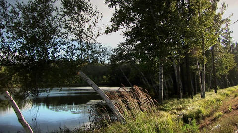 Trees and plants on the side of a reflective lake in... Stock Video Footage